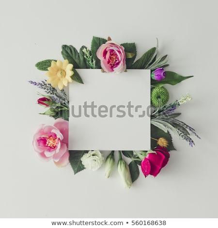 Assinar flores topo ilustração flor fundo Foto stock © bluering