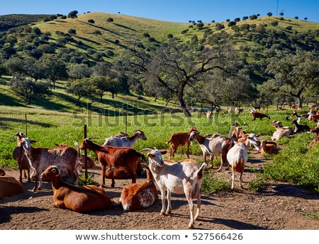 農村 · 道路 · スペイン · マラガ - ストックフォト © lunamarina