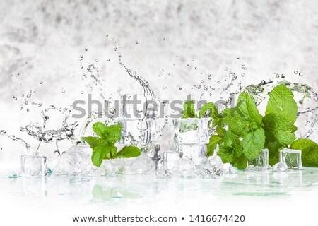 Taze yeşil nane yaprak buz Stok fotoğraf © dariazu