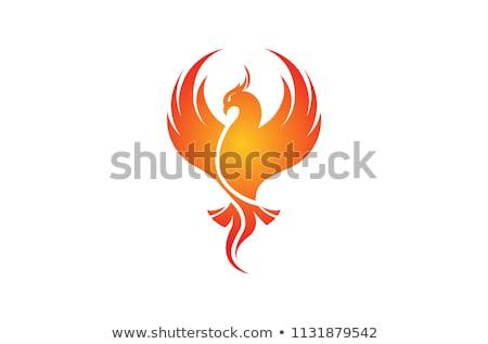 フェニックス 鳥 ロゴ ベスト 高級 コンサルティング ストックフォト © krustovin