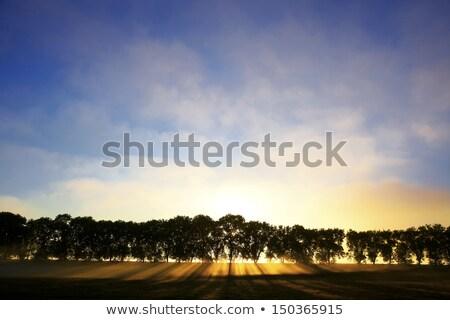 Burgundy landscape in morning mist Stock photo © LianeM
