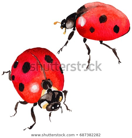 Ink and Watercolor Sketch of a Ladybug Stock photo © cidepix