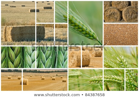 Agriculture and farming photo collage Stock photo © stevanovicigor