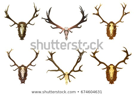 collection of wall mounted red deer hunting trophies Stock photo © taviphoto