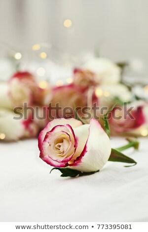 白 赤いバラ ソフト 妖精 ライト 長い ストックフォト © StephanieFrey