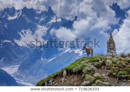 Mont Blanc and Mer de glace glacier Stock photo © Antonio-S