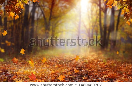 Dry Leaf on Nature Background Stock photo © bluering