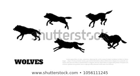 Wolf flock. Forest predator beast. Vector illustration Stock photo © MaryValery