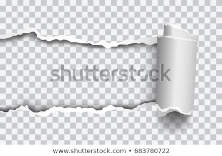fehér · papír · perem · kettő · darabok · szakadt - stock fotó © timurock