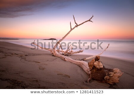 Summer Mood, Beautiful Sandy Beach in Evening Time Stock photo © robuart