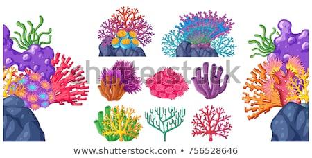 Hínár szett növények tengeri vízalatti kövek Stock fotó © robuart
