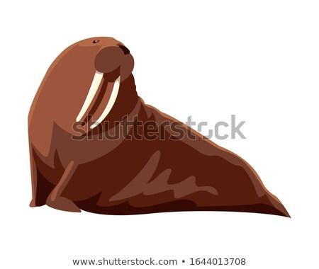 Morsa icono grande marinos mamífero aislado Foto stock © MarySan