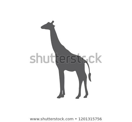 Afrika hayvan sevimli zürafa ikon yalıtılmış Stok fotoğraf © MarySan