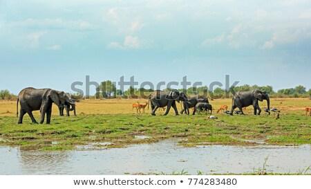 川 シーン 多くの 野生動物 実例 自然 ストックフォト © colematt