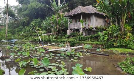 Bali tradicional casa bambu árvores edifício Foto stock © galitskaya