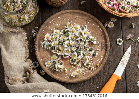 Cutting up daisy flowers to prepare herbal syrup Stock photo © madeleine_steinbach