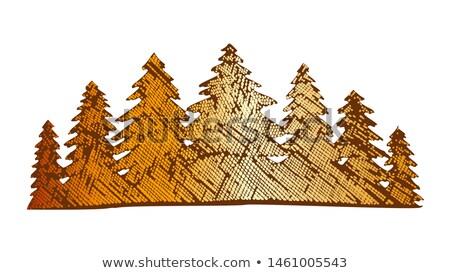 Color Drawn Landscape Pinery Coniferous Forest Vector Stock photo © pikepicture