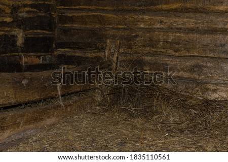 Cows in feeding place Stock photo © 5xinc