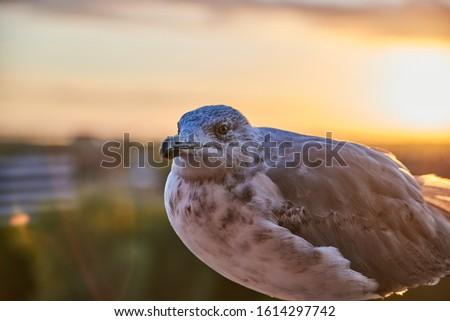 madár · repülés - stock fotó © zzve