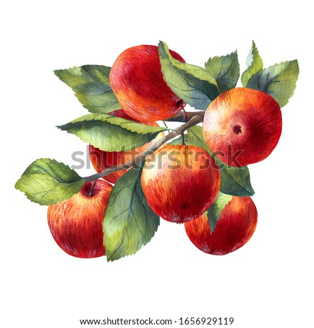 Apples on the twig Stock photo © hraska