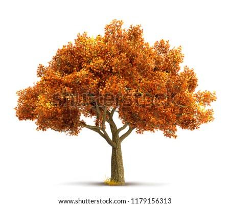Stok fotoğraf: Güzel · sonbahar · ağaçlar · tek · başına · huş · ağacı