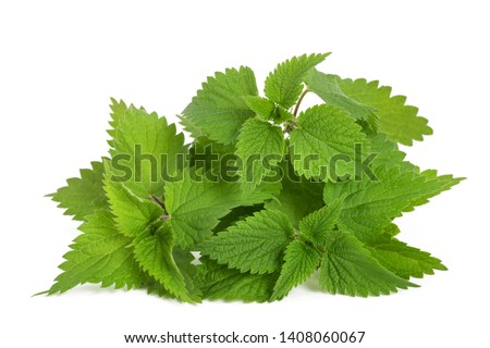 Nettle leaf. Stock photo © Leonardi