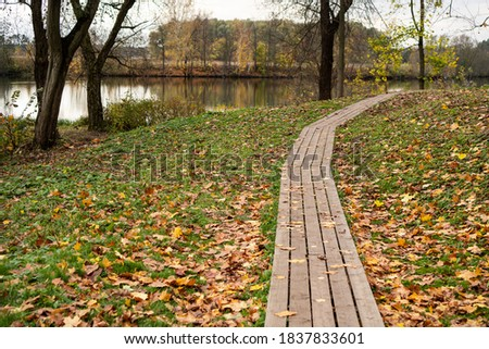 Path leading into the forest Stock photo © tilo