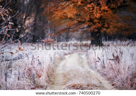 Stock photo: Autumn landscape in late November