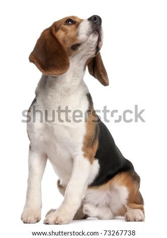 Posiedzenia psa biały Zdjęcia stock © wavebreak_media