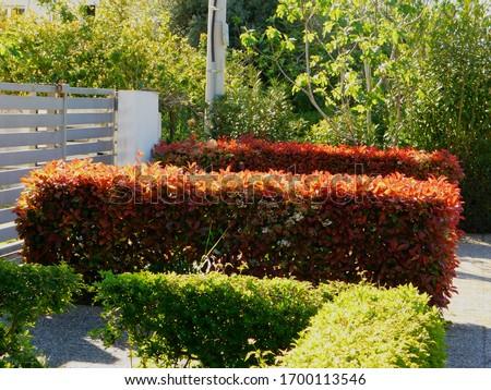 red robin stock photo © devon