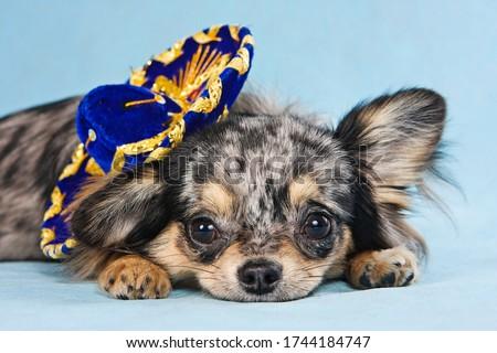 Studio giovani cane sfondo cucciolo pet Foto d'archivio © cynoclub