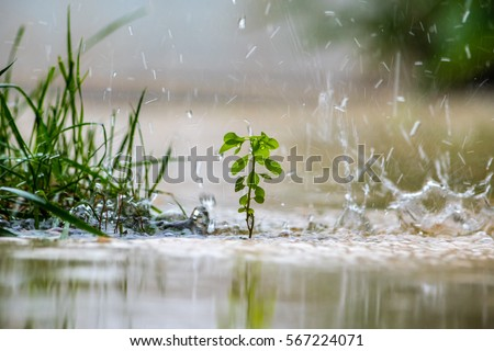 Close up of a green plant while it is raining. Stock photo © oksanika