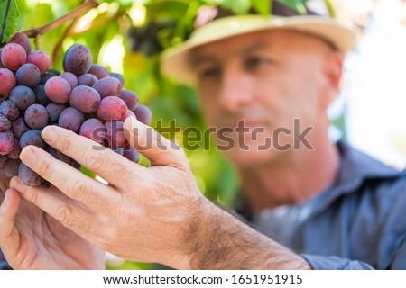 Grape growers Stock photo © photography33