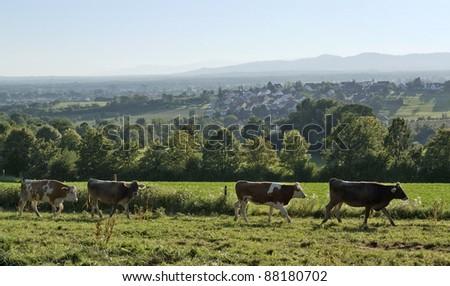 Panoramic View Around Emmendingen Photo stock © PRILL