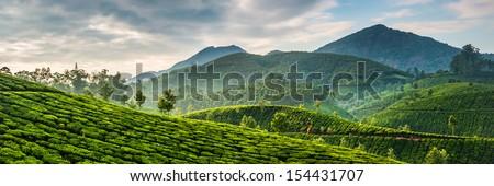 Górskich herbaty plantacja Indie chmury charakter Zdjęcia stock © Mikko