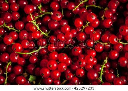 Grosella rojo grosella bayas textura Foto stock © dmitry_rukhlenko