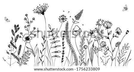 高山 · 草原 · 花 · 青 · 白 · 山 - ストックフォト © grafvision