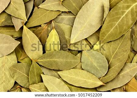 secas · laurel · folha · árvore · fundo · verde - foto stock © marfot