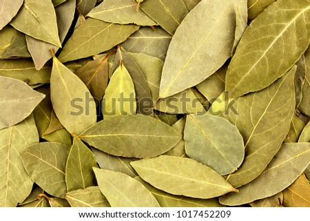 Dried bay leaves Stock photo © Marfot