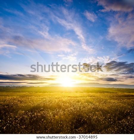 beautiful sunset above green filed Stock photo © mady70