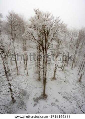 misty · giorno · gelo · albero · luce - foto d'archivio © kotenko