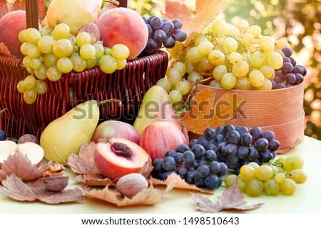 autumn fruits Stock photo © wildman