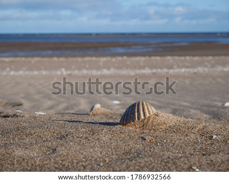 Seashells as summer coastal background, nature and travel Stock photo © Anneleven