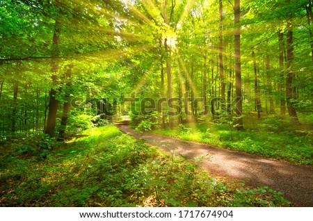 Beech forest. Stock photo © asturianu