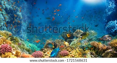 Underwater life. Coral reef, fish. Stock photo © photocreo