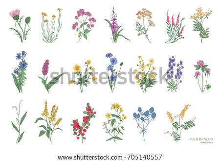 everlasting flower background Stock photo © smithore