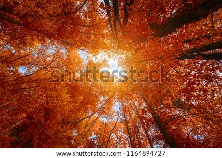 Landscape with sun shining though trees Stock photo © elenaphoto
