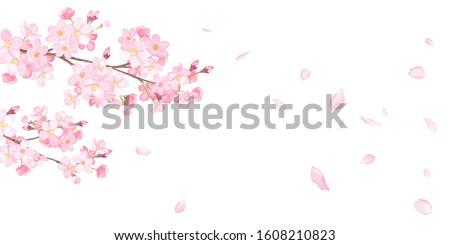 çiçekli · kiraz · çiçeği · ağaç · bahar · sezon · örnek - stok fotoğraf © rghenry