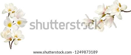Bloei witte magnolia voorjaar gevoel ondiep Stockfoto © brebca