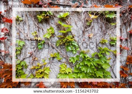 organique · fruits · jardin · fruits · légumes · croissant - photo stock © unikpix
